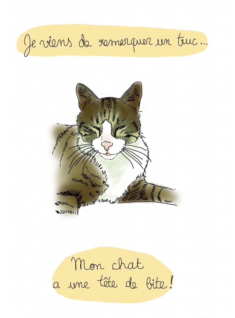 Pauvre chat - Droits d'auteur : Camille Skrzynski
